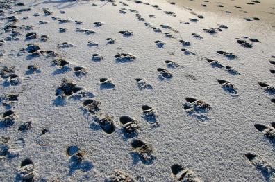 snowfootsteps