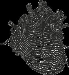 heart-152594_1280